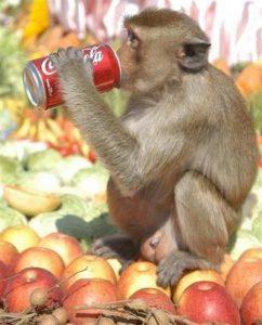 Monkey_Buffet_Lopburi_02